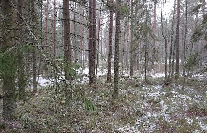suden metsä pirkanmaalla